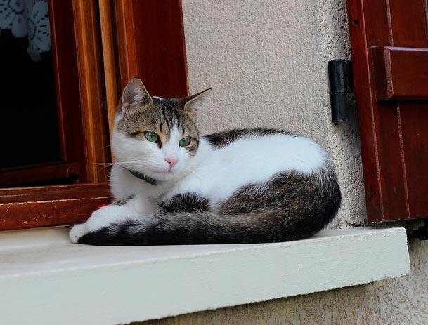 Рисунок драгунский кот в сапогах