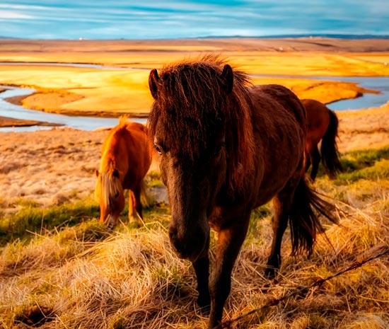 картинки о чём плачут лошади