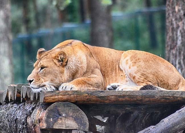 лев толстой прыжок краткое содержание