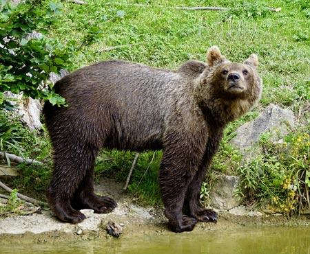 краткое содержание мой знакомый медведь