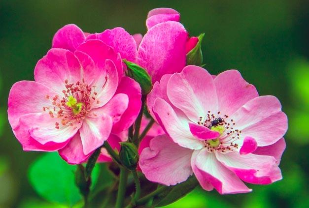 Неизвестный цветок для читательского дневника