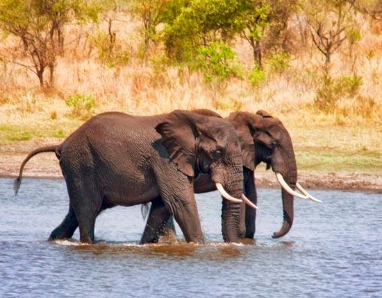 главная мысль слоненок для читательского дневника